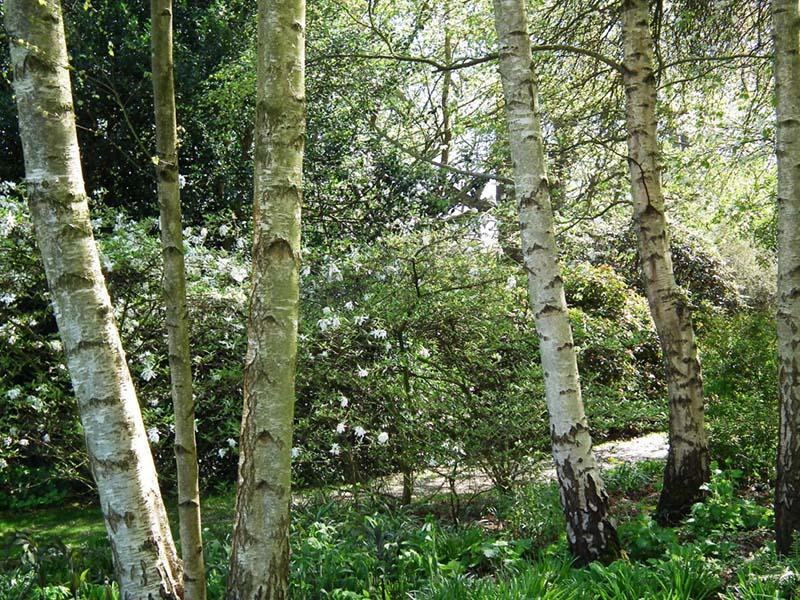 woodland border